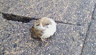 [IMAGE]鳥